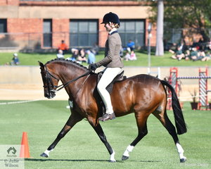 Rebecca Shute's 'Cimeron Poprock' took fourth place in the class for Novice Show Hunter Pony 13.2-14hh.