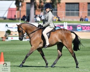 Regular and successful Adelaide visitor, Lynda Hayes rode Nicole Parson's, 'Class Orlando Bloom' to take second place in the class for Novice Show Hunter 13.2-14hh.