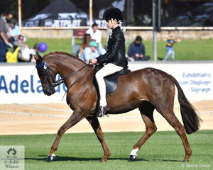 Brodie Kittle rode E and N  Kakoschke's, 'Thorwood Prince Charming' to win the class for Novice Pony 12-12.2hh.