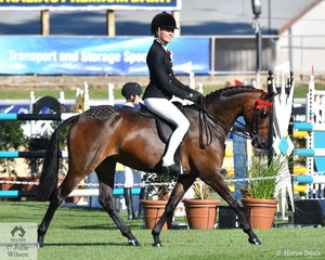 Jess Stones rode Joanne Stewart's, 'Kolbeach Jemima' to win the strong class for Novice Pony13.2-14hh.