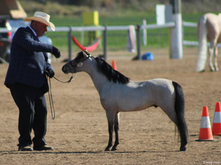 Fantasia Park Zen owned by Nicole Smith and shown by Doug Farmer