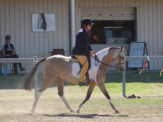 Brampton Love and Kisses  - Reserve Champion ridden Non Solid Dilute