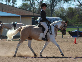 Champion ridden non solid dilute was Gold Hanger Sophia