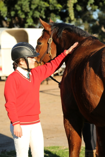 Riders learn horses prefer stroking or scratching rather than loud heavy pats as a reward – it replicates the way they nibble each others' withers in the paddock.