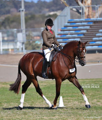 "Rachel Wessel and ""Bella Rossa""  won The SKS GROUP Large Show Hunter Horse Championship."
