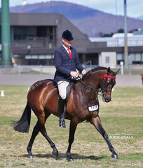 """The CBC TRAVEL Champion Small Saddle Horse """"KP Royal Prince"""", ridden by Simon De Leeuw for owner Leah Walsh."""