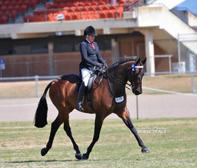 """Rachel Wessel's impressive """"Santino"""" was The GORST RURAL Champion Large Saddle Horse over 16hh."""