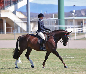 Alyssa Walsh was Reserve Champion in The BREUST BUILDING Rider 21 & under 30 years event.