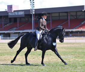 """Jess Stones rode Joanne Hutchinson's """"Gentry Park Black Label"""" to take Reserve Champion in The PROACTIVE ANIMAL HEALTH Large Show Hunter event."""