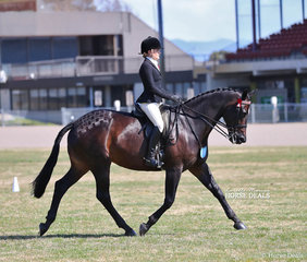 Reserve Champion in The JOANNE & EMMA HUTCHINSON Rider 17 & under 21 years event Montana Breust.