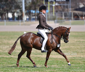 """The WESSEL DRILLING Champion Small Show Hunter Pony """"Owendale Valencia"""" exhibited by the Benton & Benton-Hall Families, ridden by Jess Stones."""