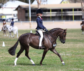 """Reserve Champion in The WESSEL DRILLING Small Show Hunter Pony event was Cassandra Parsons' """"Yartarla Park Mistletoe""""."""