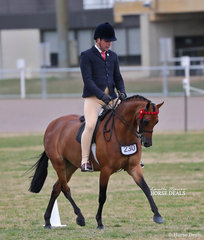 "Daniel McNamara rode Emma Richardson's ""Nalinga Piano Man"" to win The WESSEL DRILLING Large Pony Championship."