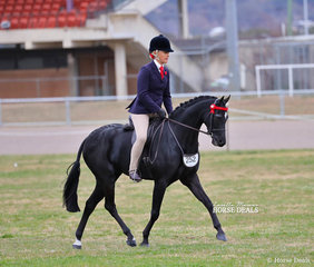 """Sarah Rieger's entry """"Pickwick Park Mr Darcy"""" was ridden by Joanne Prestwidge to win Reserve Champion in TheWESSEL DRILLING Large Pony event."""