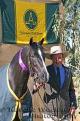 Champion Led Stallion 'Regal Power' exhibited by Geoff Wallen