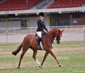 """Reserve Champion in The WHITE HORSE EQUESTRIAN Small Galloway event """"Time Square"""", exhibited by Belinda Sibley and ridden by Trinette Crawford."""