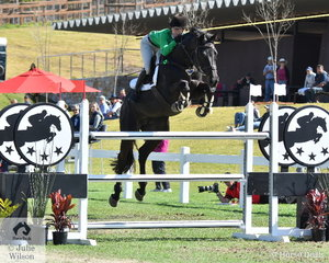 Riding for the Oaks Sport Horses Team, Izabella Stone is pictured aboard, 'Lincoln MVNZ' that did not touch a rail all competition and added only a few time penalties.