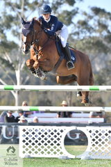 Amelia Douglas representing Team Chatham Park is pictured aboard her talented Barrichello during the second round of the Australian Teams Jumping League competition.
