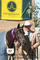 Champion Led Filly 'Gatton Starlight' exhibited by School of Animal Studies Gatton Uni & shown by Allan Wallen