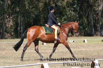 Christopher Ware & 'Wungum Quest' going their paces in the Junior Preliminary Dressage for a place