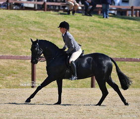"""Sarah Osaulenko riding """"Gentry Park Take Note"""" to win the Open Small Show Hunter Championship, Newcomer & Preliminary events."""