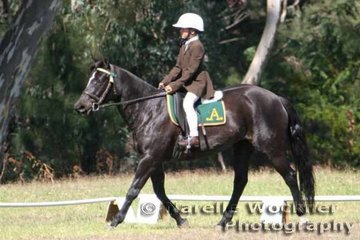 The Williamson family's 'Coomalea Henabo' competing in the Junior Preliminary Dressage