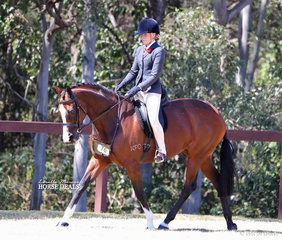 """Alana Smith's """"Madam Butterfly"""" photographed working out in the Child's Small Show Hunter Hack event."""