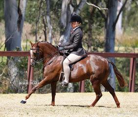 "Tanya Benton-Hall and ""Owendale Valencia won the Medium Show Hunter Pony Championship."