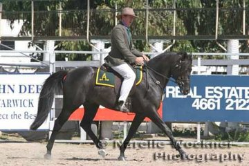 'Rocksbury Explorer' exhibited by Allan Willett winner of the Hack Stallion 4 yrs