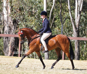 """Chelsea Morelli rode """"Mandaley Silk Road"""" to win Champion Open Large Pony."""
