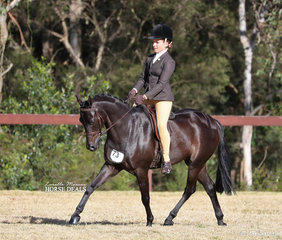 """Addisyn Ream's """"Langtree In The Dark"""" pictured working out in the Large Show Hunter Pony event."""