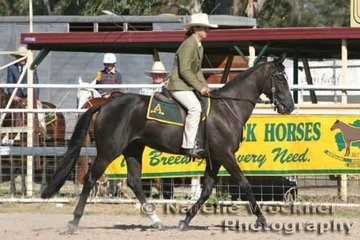 Working out to win Reserve Hack 3yrs 'Ellendale Courtney' exhibited by K. Fritz & ridden by Mayanne Gough