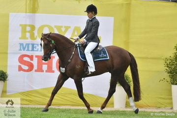 Dana Smith's, 'Camelot Double Impression' (Royalle Double Your Money/Camelot Rivoli First Impression) took second place in the class for Australian Stock Horse Hack Stallion.