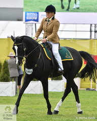 Amy Britt took third place in the  class for Australian Stock Horse Hack Gelding with her, 'Tarraway Jackson' (Clarke Family Review/Kirkby's Stud Olivia).
