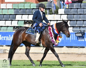Rob Vandyke rode his own and Julie Vandyke's  Mare 4 years Old and Over, Over 15hh, 'Peppertreefarm Cassie' 'Jindalee Casanova/Bobadil Balay) to claim the Australian Stock Horse Ridden Championship.