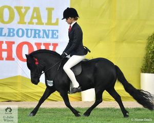 Ebonie Lee rode the Bellman and Horspole nomination, 'Colvadale Odin' to win both the Novice and Open class for Shetland 10-10.2hh. and take out the Champion Ridden shetland award.