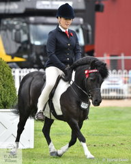 Lee Purchases', 'Korawyn Show'n'tell' took  sixth place in the class for Ridden Shetland 10-10.2hh.