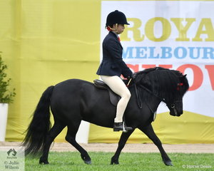 Kara Mamouney - Brown's, Balnagown Springtime took fifth place in the class for Shetland 10 - 10.2hh.