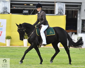 Fiona Gordon rode her 'Gordonvale Cassia' (Wundurra Impact/ Quiera Cassie) to win the class for Australian Stock Horse Four Years and Over 15hh and Under.