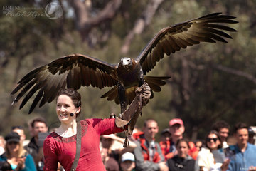 Jade Dickenson with her male wedgetail eagle Zorro from the Full Flight Bird Of Pray Centre