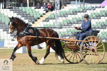 Matthew Marriott drove the Murroka Clydesdales', 'Miriam Two' to take out the Delivery Show Harness Horse Championship.