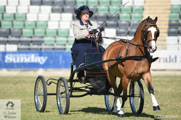 Vicki Mantel drove her own and Melanie Mantel's, 'Amarah Park Targo' to take third place in the class for Harness Pony 12-13hh.