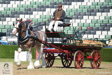 William Jackson drove his, 'Loch Linnhe Prince Harry' to take out the award for Reserve Champion Harness Clydesdale.
