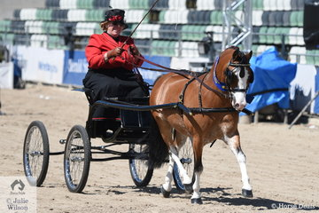 A delighted Diane Boardman drove her own, 'Simeon Salute' to win the class for Lady's Harness Pony 12hh and Under.