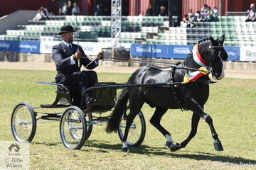 Andrew James claimed the 2019 Royal Melbourne Show Supreme Champion Harness Pony 14hh and Under with his own and Corinne Collins' outstanding, 'Roseair Manikato'.