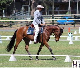 Ade Bowden in the Australian Stock Horse Prelim 1A