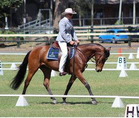 Ade Bowden in the Australian Stock Horse Prelim 1A