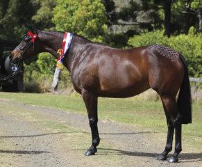 Champion Led Riding Pony Tremayne True Moment exhibited by Paula Anthony