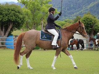 Oliva Bell cracking the whip in the working Stock Horse