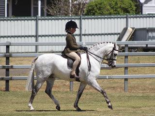 Champion Hunter Pony exhibited by  Lola Alaia
